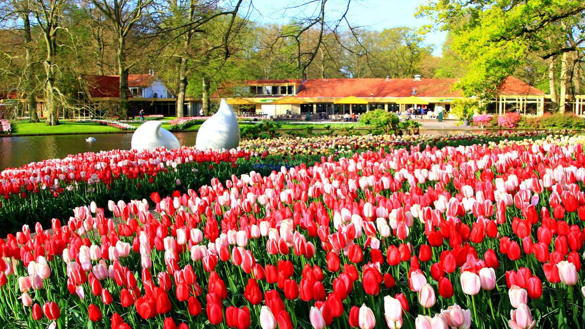 Visiting the tulip gardens of the keukenhof lisse the for Jardin keukenhof 2015