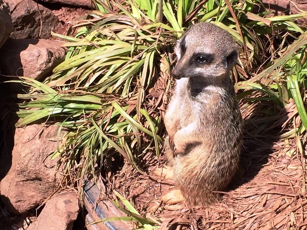 Dartmoor Zoo, Devon - Copyright: www.globalmousetravels.com