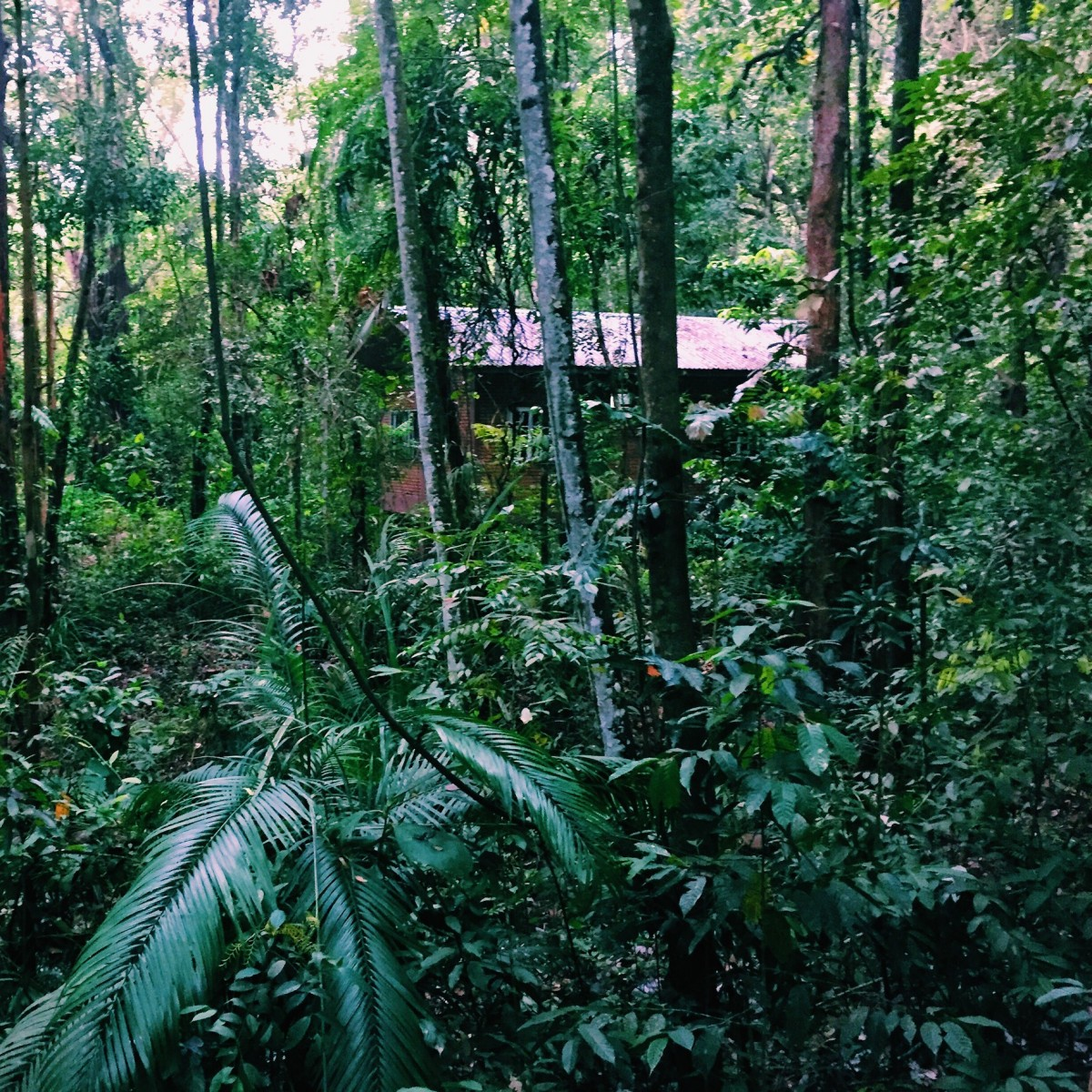 Permai Rainforest REsort, Borneo, Malaysia - Copyright: www.globalmousetravels.com