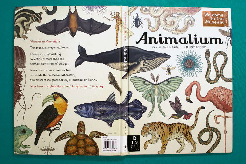 Animalium © Big Picture Press