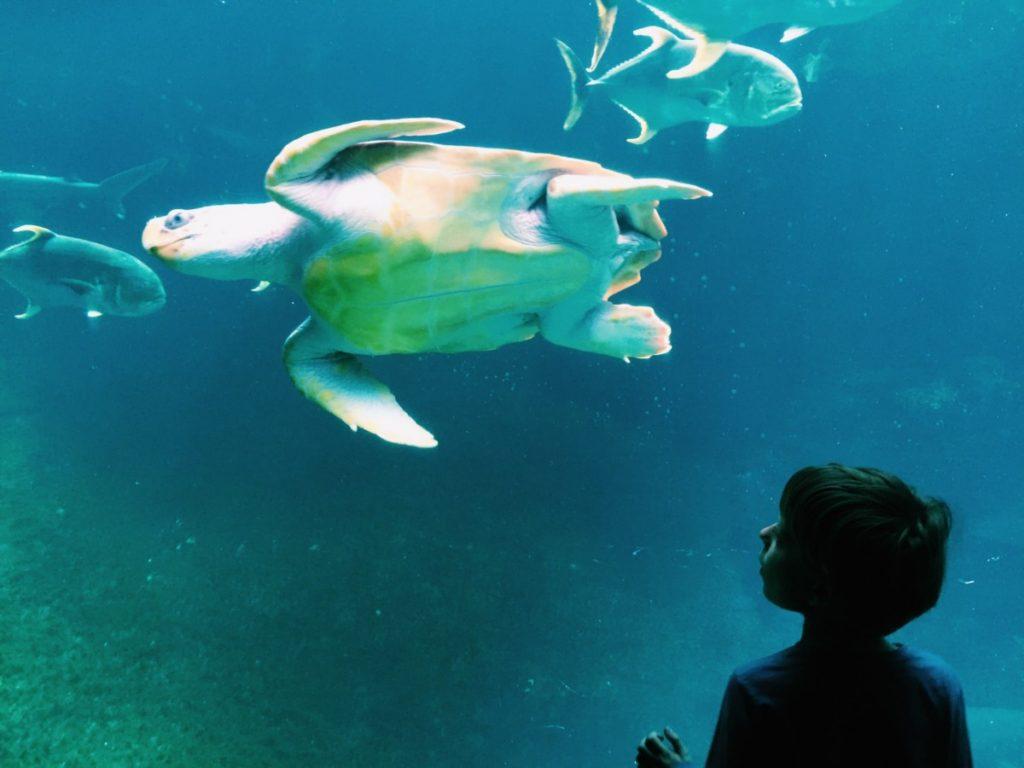 diving into the at nausicaā aquarium boulogne sur mer globalmouse travels