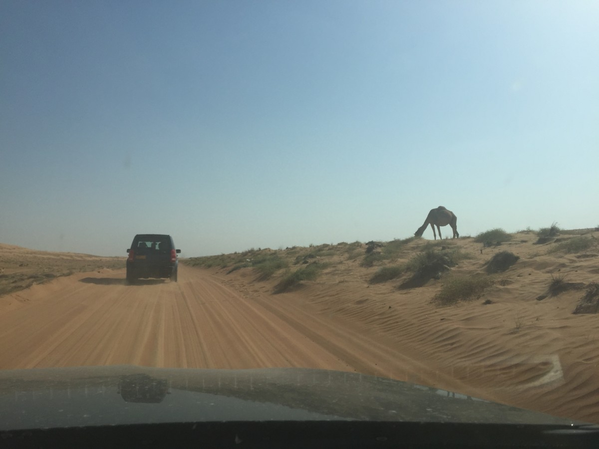 Itinerary for oman 14 day road trip around oman with for Fun road trip destinations east coast