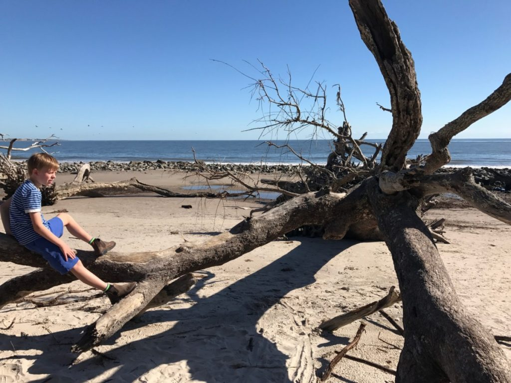 Driftwood Beach, Jekyll Island - Our family trip through Florida and Georgia - copyright: www.globalmousetravels.com