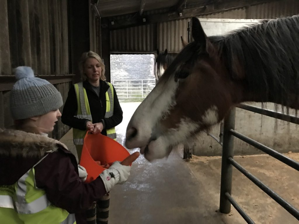 Fedding the Clydesdale Horses at Blackstone Farm - A wonderful winter trip to Ayrshire with kids - copyright: www.globalmousetravels.com